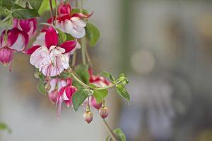 台中2018臺中世界花卉博覽會一日遊
